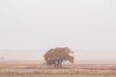 Un árbol anaranjado en la niebla Imagen de archivo