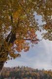 Un árbol bonito de la caída con un cielo azul Foto de archivo libre de regalías