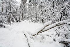 Un árbol caido cubierto con nieve miente en la trayectoria Imagen de archivo