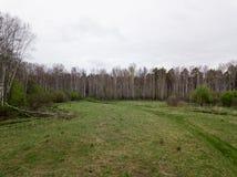 Un árbol caido en un claro rodeado por un abedul Imagen de archivo