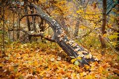 Un árbol caido en el bosque Foto de archivo