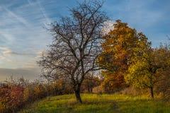 Un árbol caido entre árboles coloridos del otoño Imagen de archivo