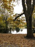 Un árbol cerca del agua Fotos de archivo libres de regalías