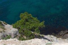 Un árbol cerca del mar Fotografía de archivo libre de regalías