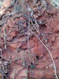 Un árbol con el suelo y las raíces Fotos de archivo libres de regalías
