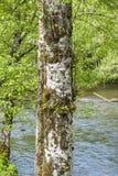 Un árbol con la cara - ketchikan stock de ilustración