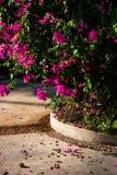 Un árbol con las flores púrpuras en una trayectoria concreta imagen de archivo
