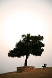 Un árbol con un banco Fotos de archivo