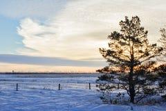 Un árbol contra salida del sol del invierno Fotografía de archivo libre de regalías