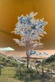 Un árbol costero solitario solarised Imagenes de archivo