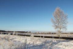 Un árbol de abedul congelado cerca del camino y del cielo azul Fotografía de archivo