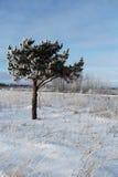 Un árbol de abedul congelado en campo del invierno y el cielo azul Imágenes de archivo libres de regalías