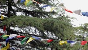 Un árbol de alerce verde y banderas budistas con mantras metrajes