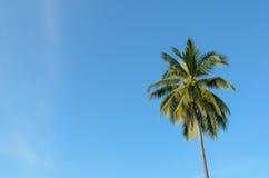 Un árbol de coco Imagenes de archivo