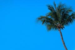 Un árbol de coco Imagen de archivo