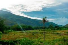 Un árbol de coco en medio de tierras de labrantío y del cielo azul Imagen de archivo