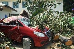 Un árbol de goma grande cayó inesperado en un coche rojo parqueado en una calma y un día soleado fotos de archivo libres de regalías