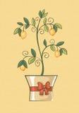 Un árbol de limón en un pote festivo Imágenes de archivo libres de regalías