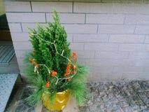 Un árbol de navidad miniatura delante de una casa Imagenes de archivo