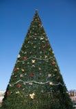 Un árbol de navidad y un cielo muy grandes Imágenes de archivo libres de regalías