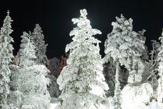 Un árbol de pino hermoso tirado en la noche. Foto de archivo