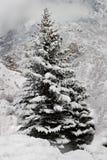 Un árbol de pino nevado en las montañas Fotos de archivo