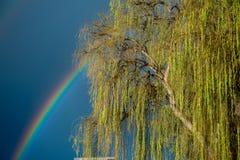 Un árbol del arco iris y del riverbank en el sur de Australia de Mannum en el 6to Au imágenes de archivo libres de regalías