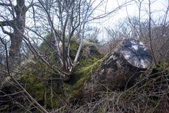 Un árbol del corte en las islas de Lewis y de Harris, Escocia imagen de archivo