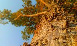 Un árbol del crid Fotos de archivo libres de regalías