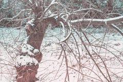 Un árbol del invierno Imagenes de archivo