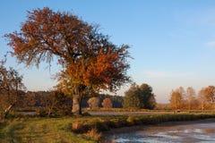 Un árbol del otoño Fotos de archivo libres de regalías