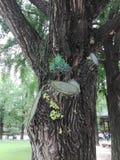 Un árbol dentro de un árbol Imagenes de archivo