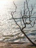 Un árbol deshojado atractivo con sus ramas contra la luz del sol de Brighr con agua azul del océano - silueta abstracta Imagen de archivo libre de regalías