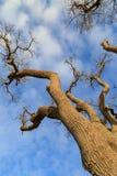 Un árbol desnudo Imagen de archivo