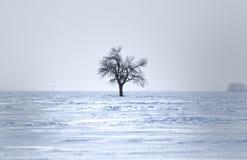 Un árbol desnudo en invierno Fotos de archivo