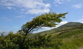 Un árbol doblado por el viento fotografía de archivo