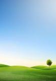 Un árbol en campo verde Imágenes de archivo libres de regalías