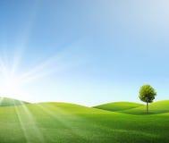 Un árbol en campo verde Foto de archivo libre de regalías