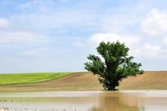 Un árbol en el agua de tierra adentro Fotos de archivo
