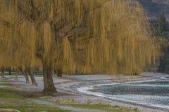Un árbol en el banco del lago Imagenes de archivo
