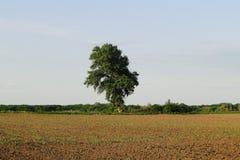 Un árbol en el borde del campo fotografía de archivo