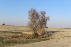 Un árbol en el desierto Imagen de archivo libre de regalías