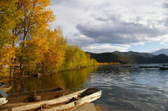 Un árbol en el lago Lugu Imagenes de archivo
