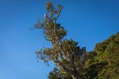 Un árbol en el soporte Raung del sitio para acampar 7 Raung es el más desafiador de los rastros de la montaña de todo el Java, ta foto de archivo libre de regalías