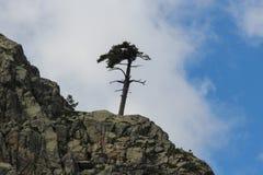 Un árbol en el top del mounatin Imagen de archivo libre de regalías