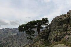 Un árbol en el top del mounatin Foto de archivo libre de regalías