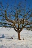 Un árbol en la nieve con el cielo azul foto de archivo libre de regalías