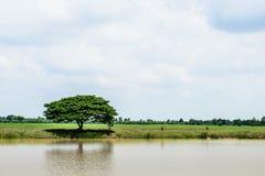 Un árbol en la orilla del lago imagen de archivo libre de regalías