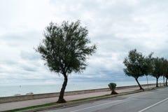 Un árbol en la orilla del mar Imagenes de archivo