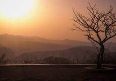 Un árbol en la puesta del sol sin las hojas pero las únicas ramas fotos de archivo